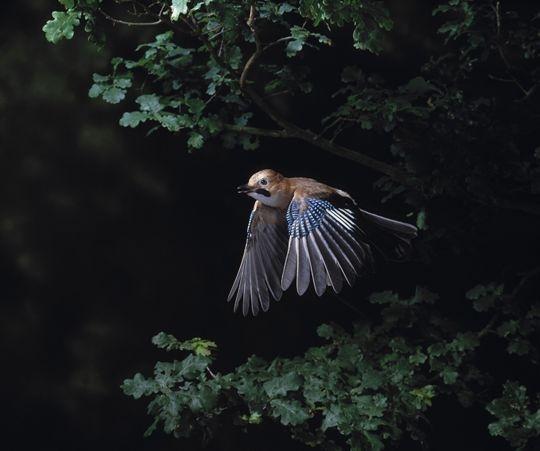 Anche gli uccelli nel loro piccolo fanno i funerali - Focus.it