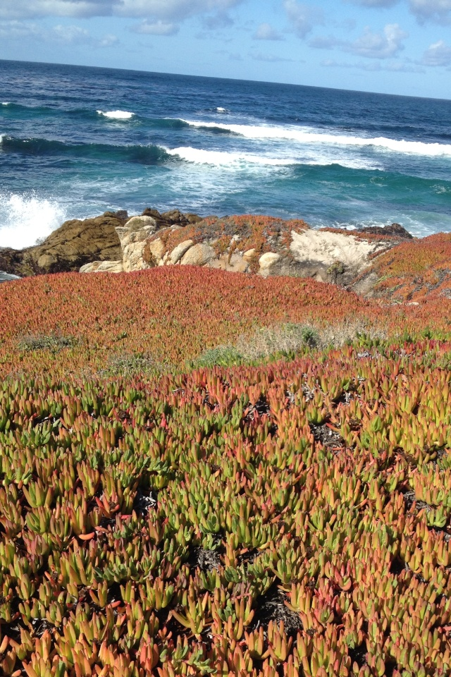 17 Mile Drive, CA... you wouldn't believe how long I stared at the ocean ..absolutely gorgeous