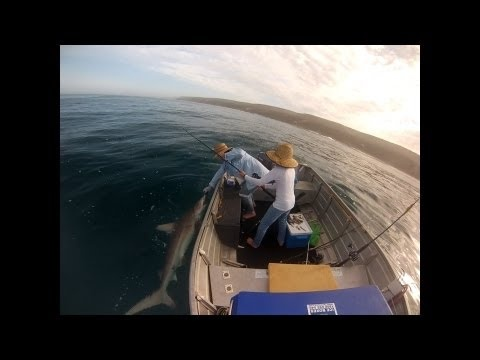SHARK!  Funny video catching a nice sized Bronze Whaler Shark and then being released