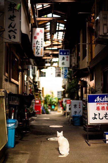 ナナと初音 by neco_onsen ,Japan alley