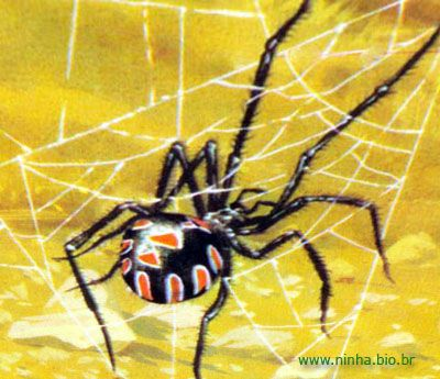 ilustração de uma aranha da família da viúva-negra
