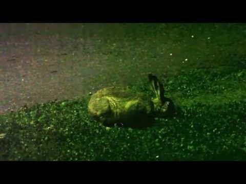 Cute animals - european hare - YouTube