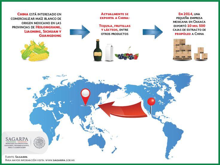 Se busca exportar maíz mexicano a China. SAGARPA SAGARPAMX