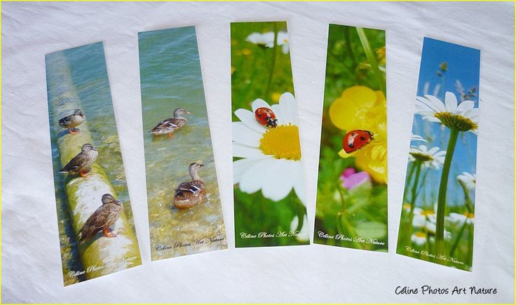 Lot de 5 marque-pages de Céline Photos Art Nature coccinelles et canards : Marque-pages par celinephotosartnature