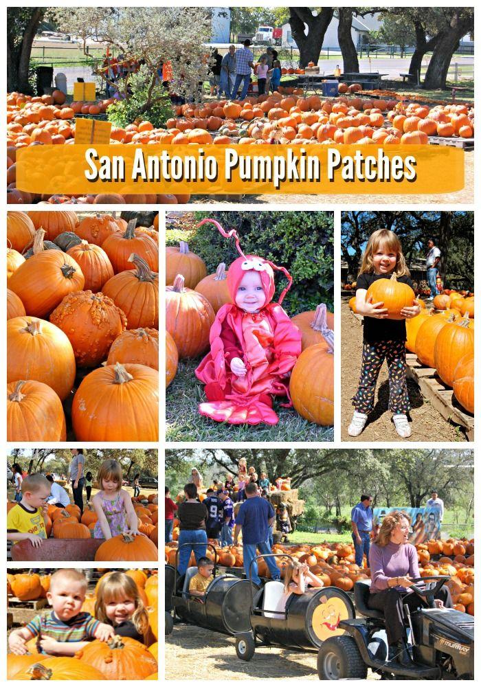 San Antonio Pumpkin Patches 2014 on SanAntonioMomBlogs.com