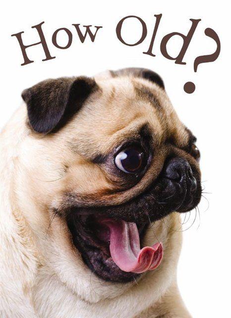 pug birthday ecards - Google Search
