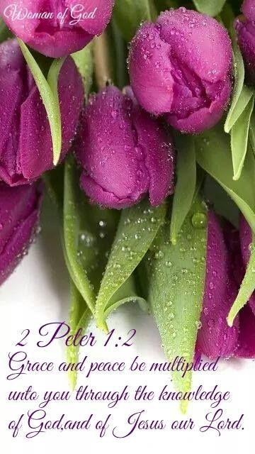 2 Pedro 1:2 Gracia y paz os sean multiplicadas, en el conocimiento de Dios y de nuestro Señor Jesús. ♔