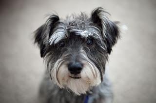 http://dicasdocao.blogspot.com.br Algumas dicas para encontrar o animal perfeito para conviver com você em um apartamento. Conheça as melhores raças para cada tipo de dono!