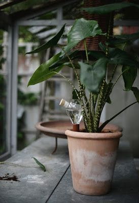 Plant care made easy: Waterworks Plantnanny.Swedish publication about Waterworks Plant Watering System - By Victoria Skoglund for Lantliv.com.