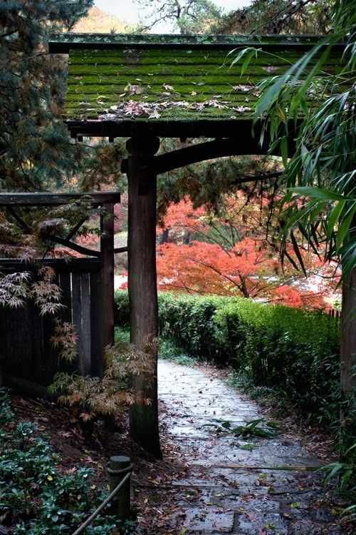 Japanese Oriental Garden, Maple Tree, Bamboo, Fall Colors, Earth Tones, Walkway, Path, Fine Art Photograph - The Garden Path