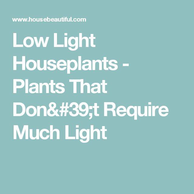 Best 20 Low Light Houseplants Ideas On Pinterest Indoor