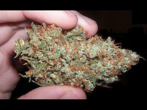 AK47 Cannabis Sorten Review