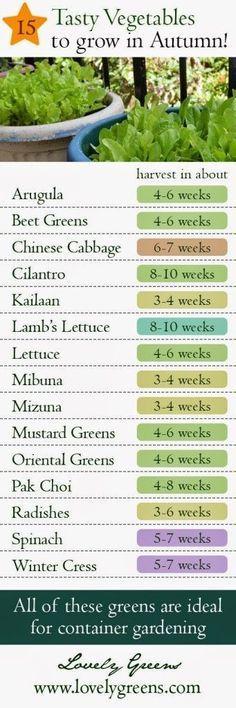 142 besten Gardening Bilder auf Pinterest | Kompost, Urbane ...
