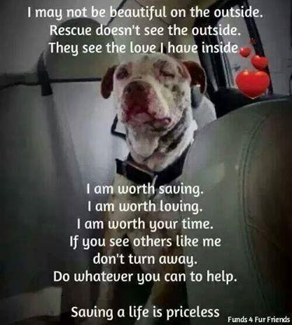 oneloveanimalrescue: Saving a life is priceless!