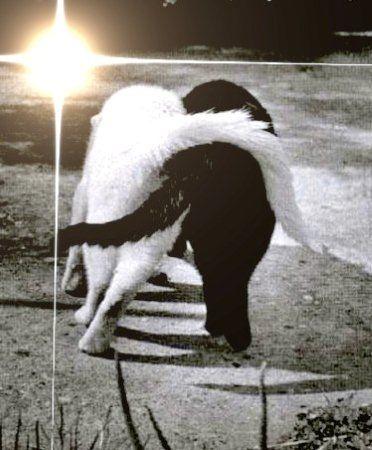 as 7 melhores imagens em bianco che abbraccia il nero no pinterest