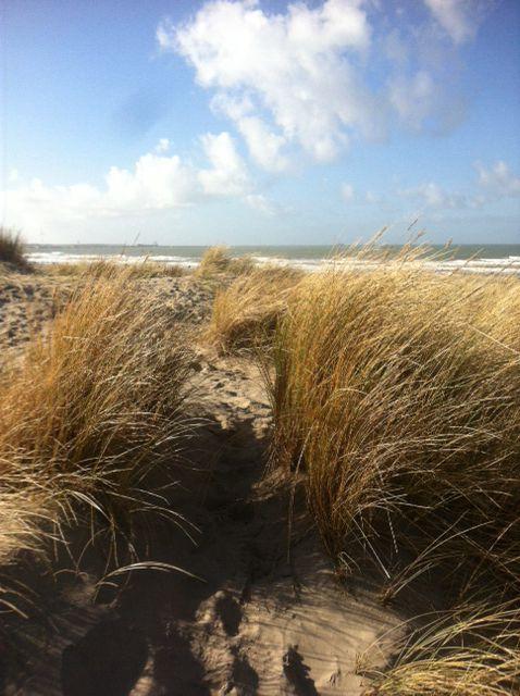 Beach, hoek van holland, holland