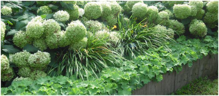 Mooie eenvoudige border met witte hortensia 39 s en for Eenvoudige tuinontwerpen