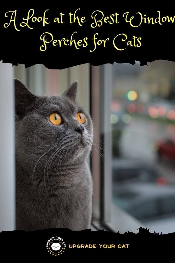 A Look At The Best Cat Window Perches For Cats Upgrade Your Cat Cat Behavior Cat Window Perch Cats