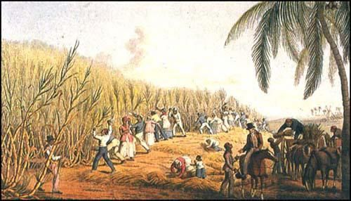 african and native american slavery essay Slavery term papers (paper 14580) on origins of american slavery : in the early seventeenth century, the english began to rapidly and successfully colonize america.