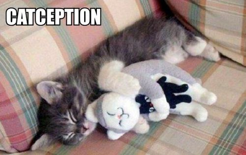 Aaww... so cute and sweet, kitten is hugging a plush kitten, holding a plush kitten!! ^-^