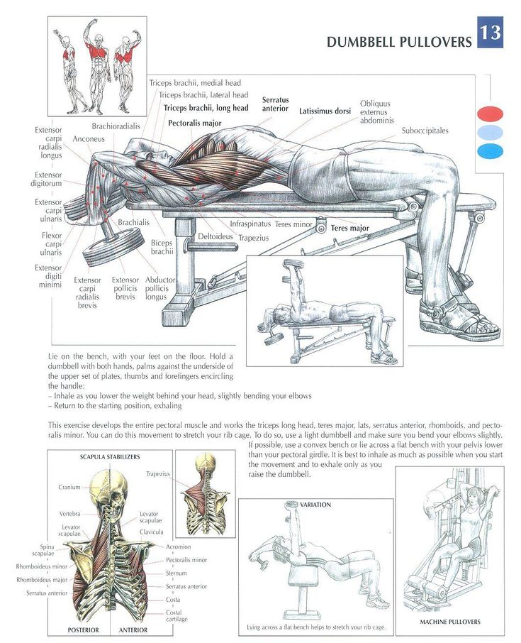 Dumbbell Pullovers ~ Re-Pinned by Crossed Irons Fitness