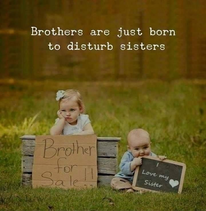 Pin By Earwax On Memes Siblings Funny Quotes Sister Quotes Funny Best Brother Quotes