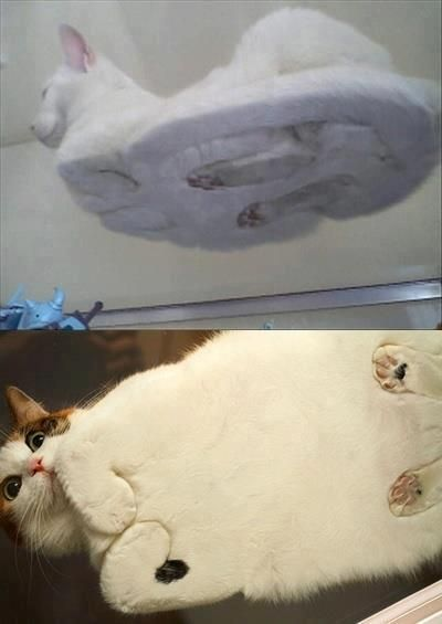 Ever wondered what a cat on a glass table looks like... this makes me giggle everytime!!