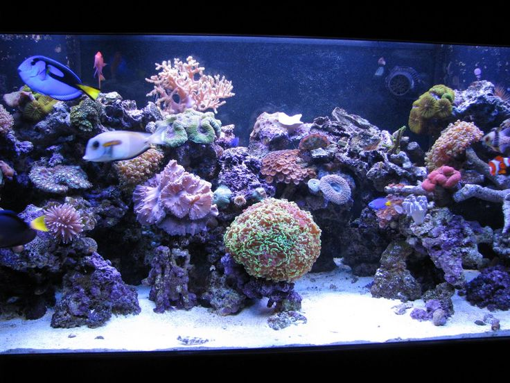 165 best Reef Tank Inspiration images on Pinterest Reef