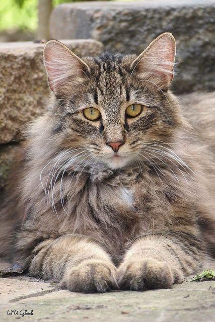 cat portrait                                                                                                                                                                                 Plus