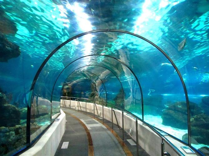 Aquarium Sea Life de Benalmadena (Andalousie - Espagne)