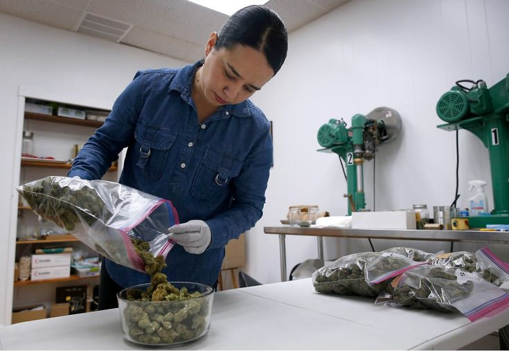 Oakland officials are reviewing 255 applications from individuals seeking special business permits to cultivate, sell, distribute and transport marijuana legally under the state cannabis laws that take effect Jan. 1.