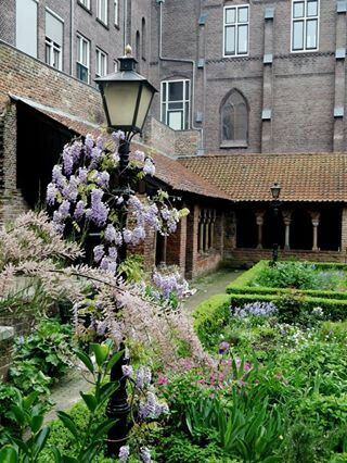 Garden in Utrecht