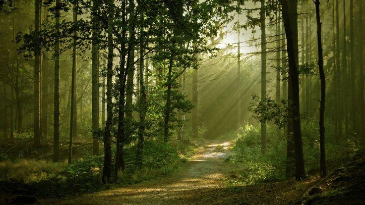camino-de-bosque.jpg (1600×900)
