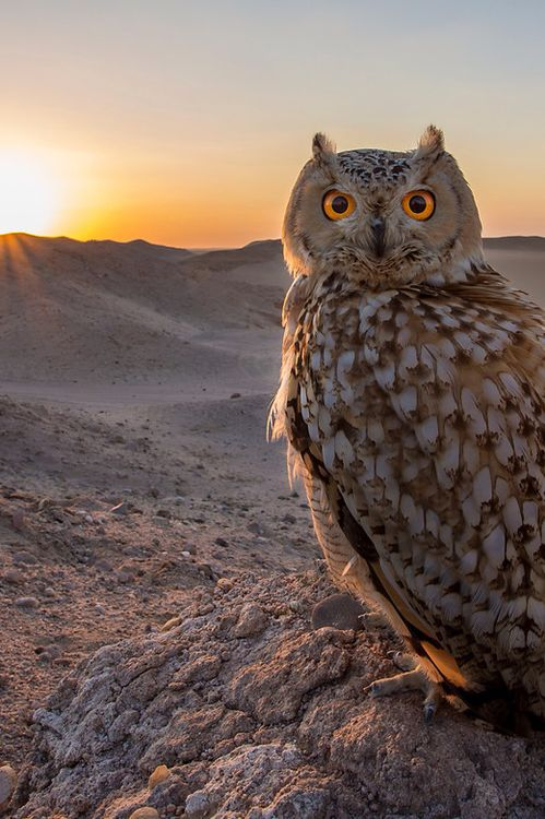 Eye contact! by Mohammad Alameer