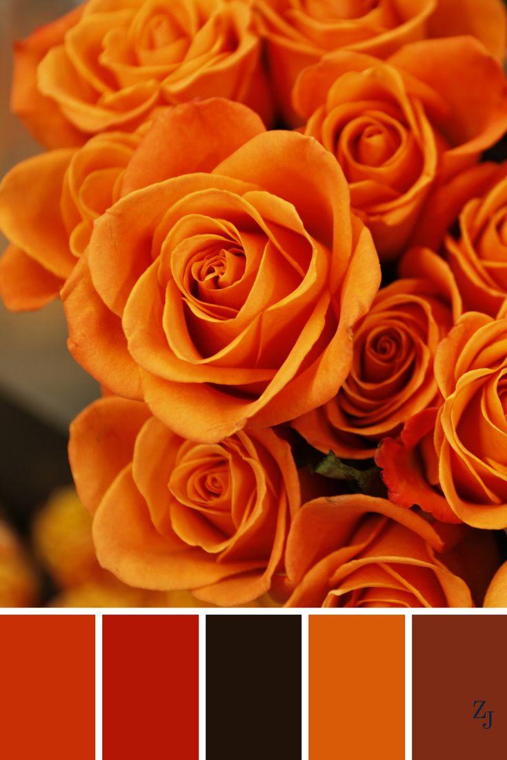 ZJ Colour Palette 355 #colourpalette #colourinspiration