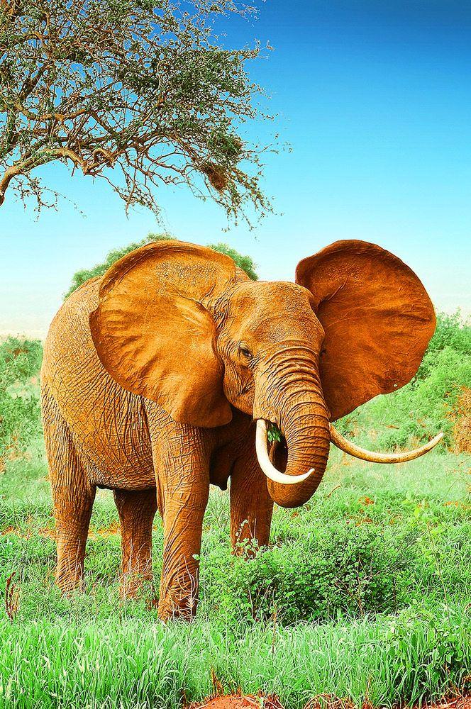 from Harvey gay elephants in the wild