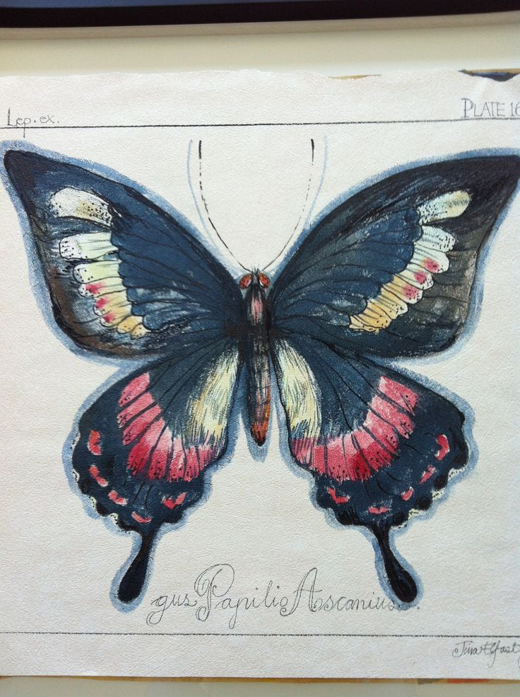 Butterfly painting in mixt media by Tina Elfast
