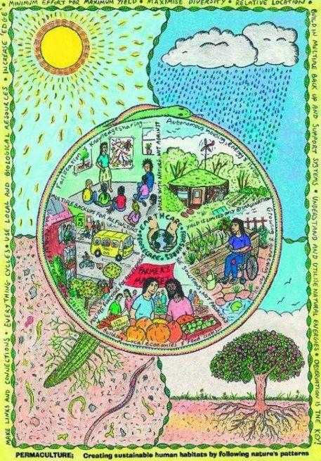 Você conhece os princípios da permacultura? clique no link e entenda o que leva tantas pessoas a se interessar por esse novo e revolucionário estilo de vida
