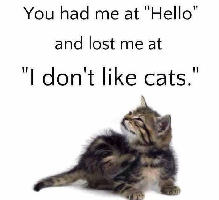 Quotes About Cats 275 Best Cat Lover Quotes & Sayings Images On Pinterest  Kitty .