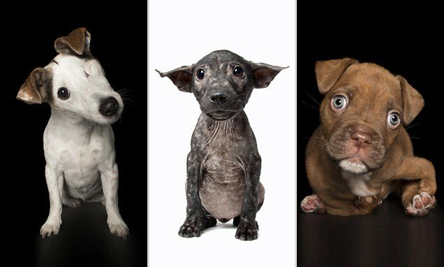 Photographs capture the 'perfect imperfections' of injured rescue dogs
