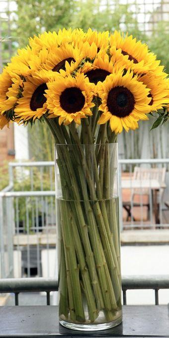 sunflowers- Las girasoles son las flores favoritas de mi hija mayor <3