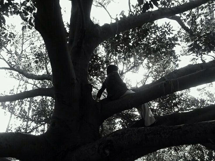#trees #climbing #view #height