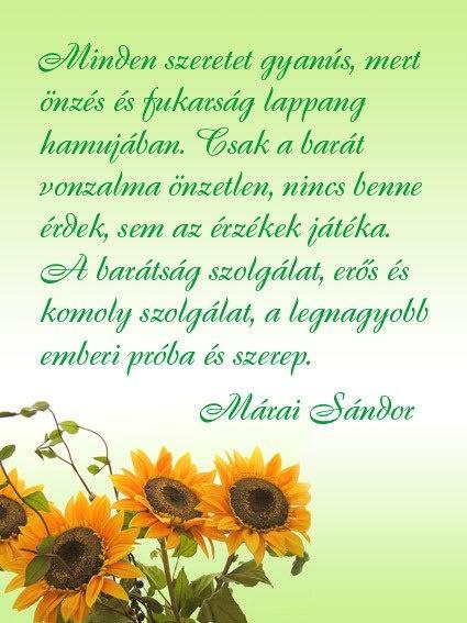 Márai Sándor idézete a barátságról. A kép forrása: Szívügyek