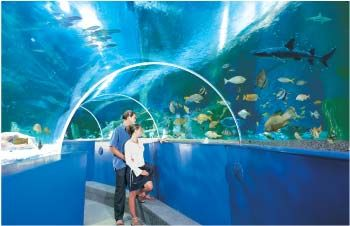 Newquay's Blue Reef Aquarium is a giant ocean tank, with fish-eye views of the Cornish coast and dazzling tropical reefs