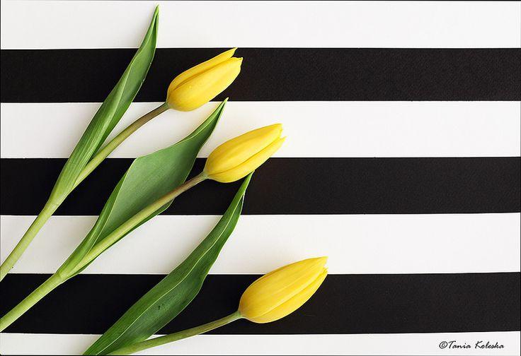 Yellow tulips...
