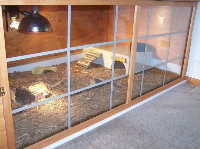 Red-footed Tortoise Habitat | Mega Ray mercury vapor uvb bulbs are the best out there in my opinion ...