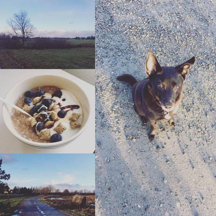 En lille tur med hunden på 2,5 km i dette skønne vejr ❄️☀️ Har fået en tid ves lægen på onsdag da jeg desværre døjer en del med mit bækken her i graviditeten, håber hun kan give mig nogle værktøjer/hjælp til at komme godt igennem den sidste del af min graviditet 🤰🏼🙏 #promenad#pw#vinter#hund#havregrød#winter#juleferie#jul