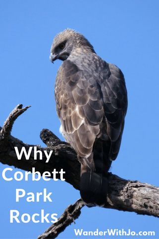 Reasons why Corbett national park is the best wildlife reserve in India and why you need to visit - now!