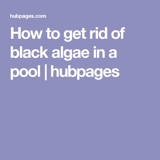 Best 25 black algae in pool ideas on pinterest swimming - How to get rid of algae in a swimming pool ...