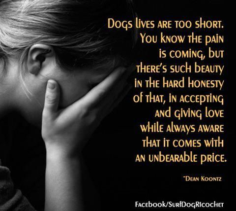 <3 my furbabies, I cannot imagine my life without them no matter how short the time is/was.